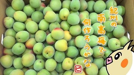 ピヨめぐモカ JA紀州 JA和歌山県農 南高梅 1.jpg