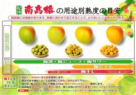 ピヨめぐモカ JA紀州 JA和歌山県農 南高梅 5.jpg