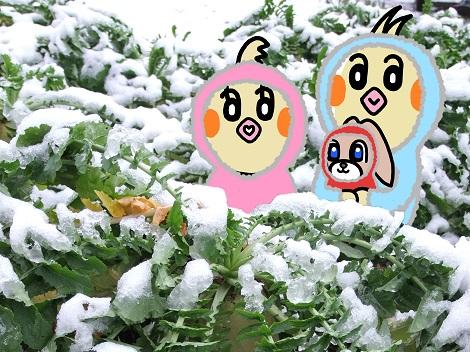 冬大根の前で記念撮影しているピヨめぐモカ.jpg