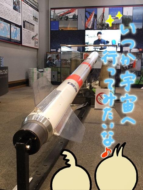 北海道大学総合博物館 15-6.JPG