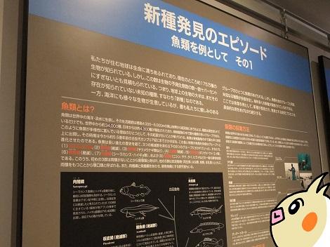 北海道大学総合博物館 5-1.JPG
