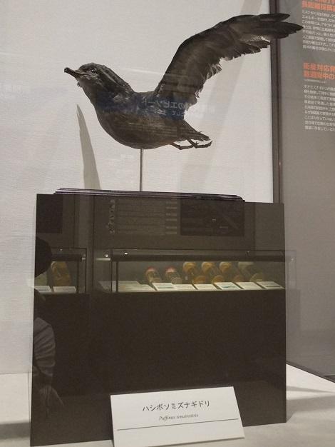 北海道大学総合博物館 5-4.JPG