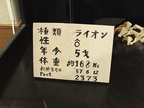 北海道大学総合博物館 6-2.JPG