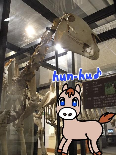 北海道大学総合博物館 7-1.jpg