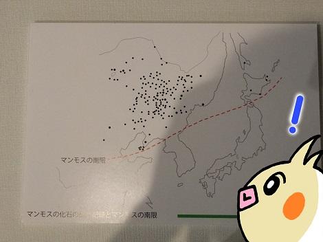 北海道大学総合博物館 8-4.JPG