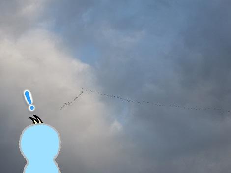 白鳥が遠くに見えてきた.jpg