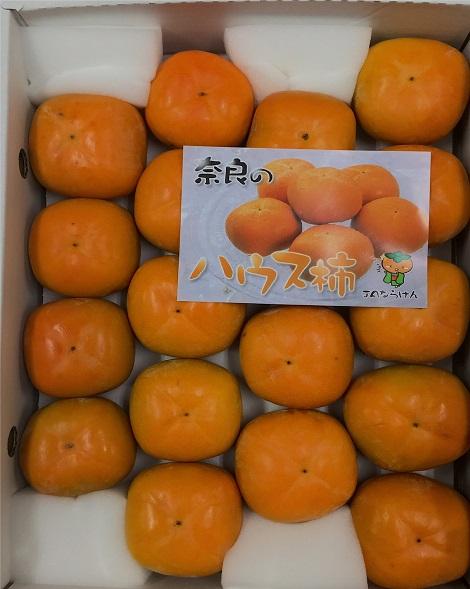 JAならけん ハウス種なし柿 刀根早生 秀 2S 18個入 中の様子.jpg